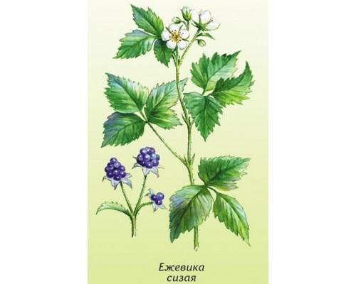Ежевики Сизой Листья (Rubi caesii folium), 50 гр