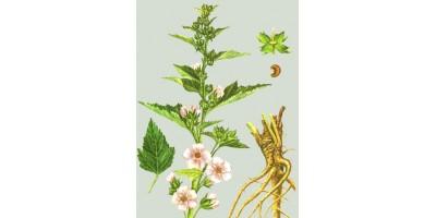 Алтея корень (Radix Althaeae), 50 гр