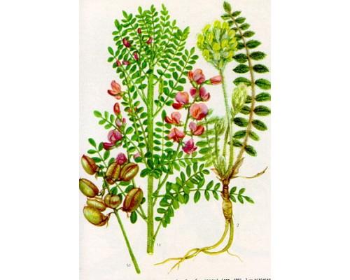 Астрагала  шерстистоцветкового трава (Нerba astragali dasyanthi), 25 гр