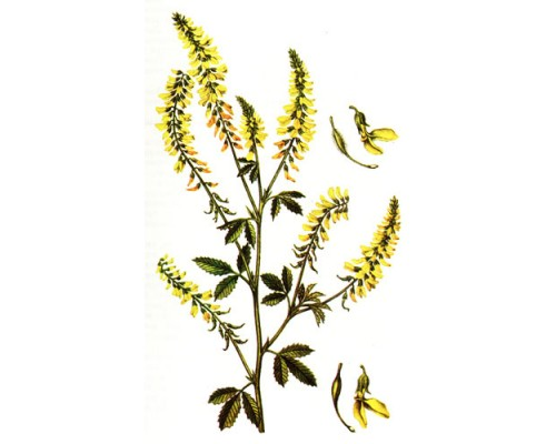 Донника  лекарственного  трава (Herba  Meliloti), 50 гр