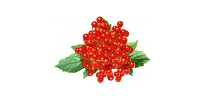 Калины плоды, 50 гр