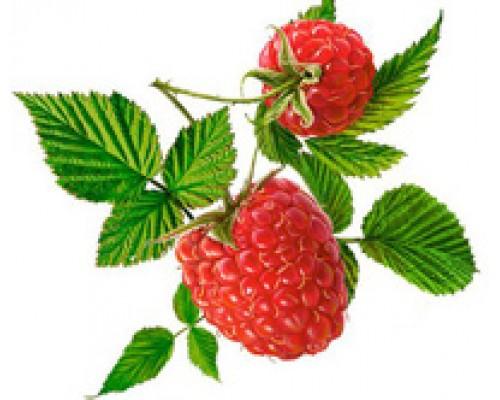Малины плоды сушеные дробленые, 50 г