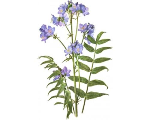 Синюхи голубой корни, 25 г