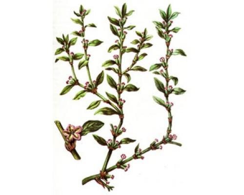 Спорыша трава (Трава горца птичьего), 50 г